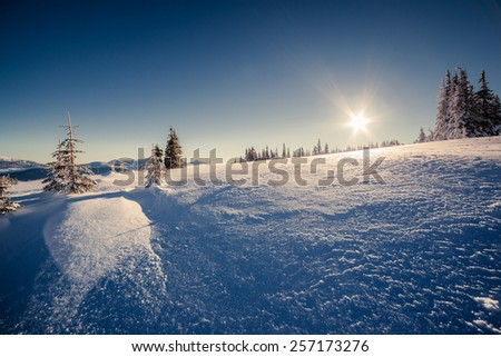 Majestic winter trees glowing by sunlight. Dramatic wintry scene. Carpathian, Ukraine, Europe. Beauty world. Happy New Year! - stock photo