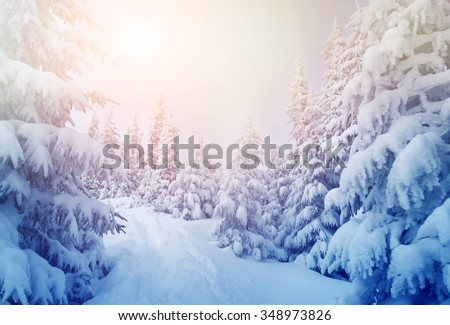 Majestic winter trees glowing by sunlight. Dramatic wintry scene. Location Carpathian national park, Ukraine, Europe. Ski resort. Beauty world. Instagram toning effect. Happy New Year! - stock photo