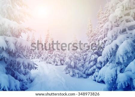Majestic winter trees glowing by sunlight. Dramatic wintry scene. Location Carpathian national park, Ukraine, Europe. Ski resort. Beauty world. Instagram toning effect. Happy New Year! - stock photo