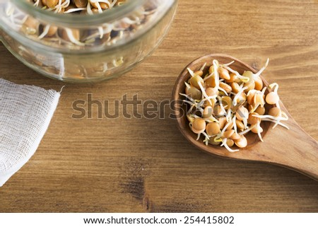 Making sprouts, lentil sprouts in wooden spoon with jar. - stock photo