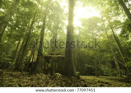 malaysian tropical rainforest - stock photo
