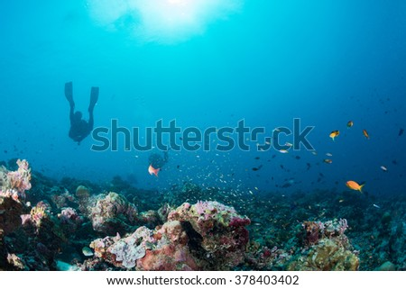 Maldives corals house for Fishes underwater landscape - stock photo