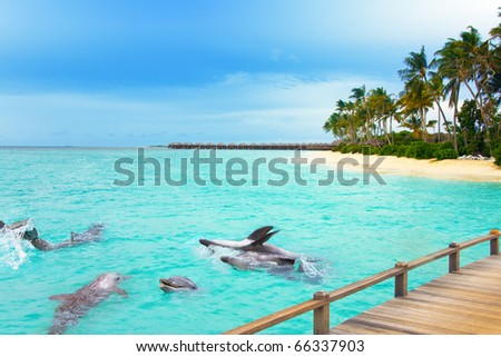 Maldives. Dolphins at ocean and tropical island. - stock photo