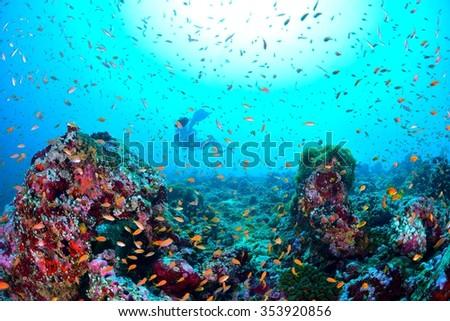 Maldives Sea - stock photo