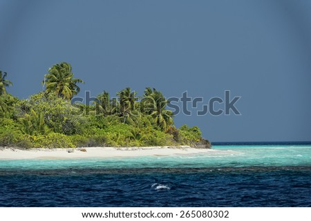 maldives tropical paradise beach crystal water white sand beach