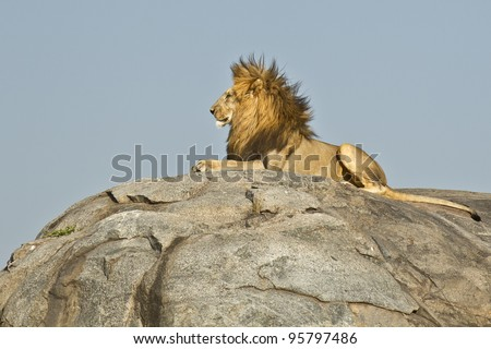 Male African Lion (Panthera leo) on top of a rock in Tanzania's Serengeti National Park - stock photo