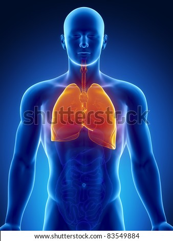 Male anatomy of human respiratory system in x-ray view - stock photo