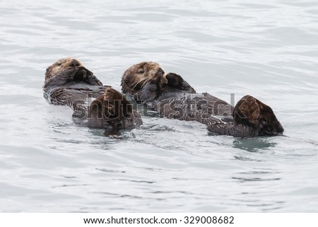 Male and female sea otters resting in the ocean - stock photo