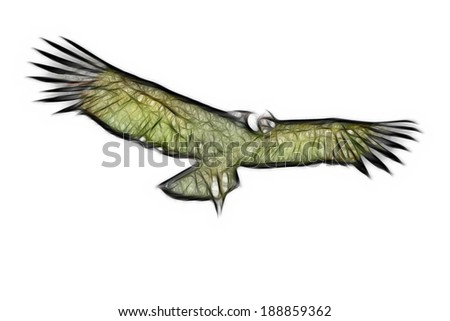 Male Andean condor in flight, shot in highlands of Ecuador Andes mountains against a white cloud. - stock photo