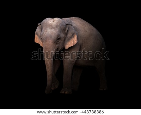 male asia elephant in the dark with spotlight - stock photo