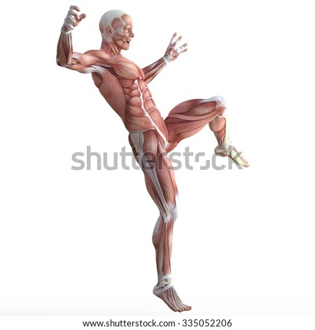 Male body without skin in a fighting pose.