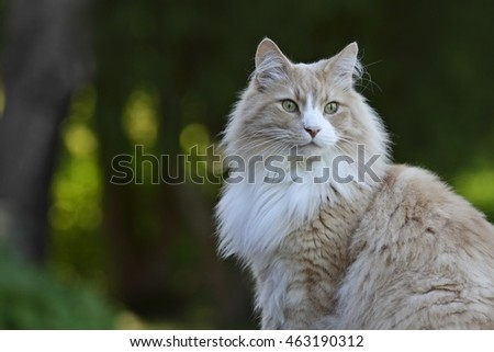 Male cat in the park