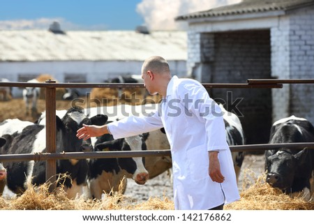male cow veterinarian at the farm - stock photo