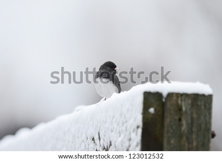 Male Dark-eyed Junco (Junco hyemalis) perched on snow covered fence on cold winter day with cloudy sky and selective focus. - stock photo