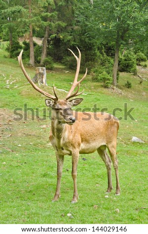Male deer on the meadow - stock photo