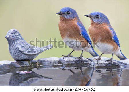Male Eastern Bluebirds on Birdbath with Iron Bird - stock photo