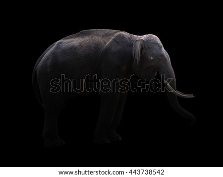 male elephant standing at night time with spotlight