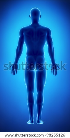 Male figure in anatomical position posterior  view - stock photo