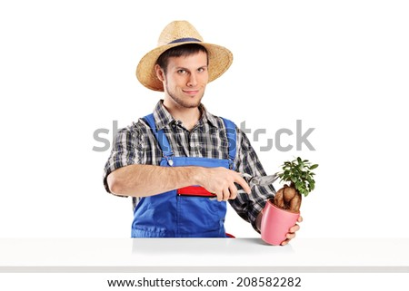 Male gardener trimming a plant isolated on white background - stock photo