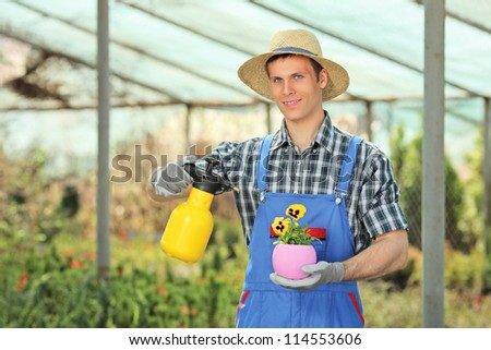 Male gardener watering a plant in a hothouse - stock photo