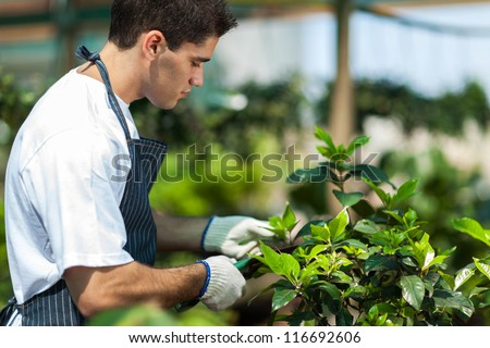 male gardener working in garden - stock photo
