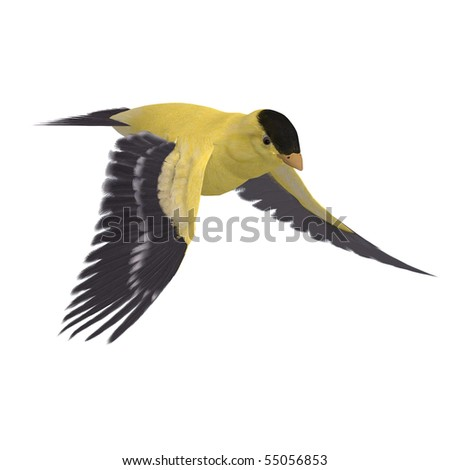 Male Goldfinch. 3D rendering with clipping path and shadow over white - stock photo