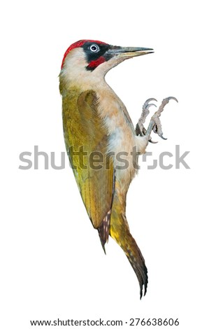 Male green woodpecker isolated on white background - stock photo