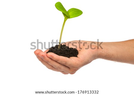 Male hand hold a small sprout and an earth handful isolated on a white background - stock photo