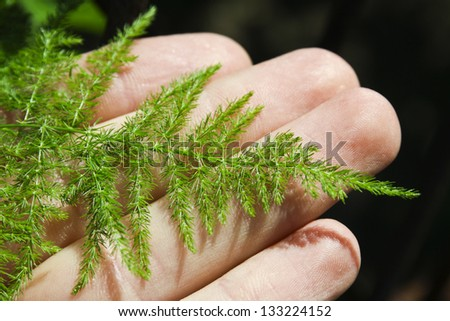 male hand holding green leave