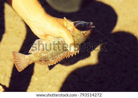 Male hand holds fresh sea fish catch with sharp fins on hook and line on sunny summer day outdoors on blurred brown background