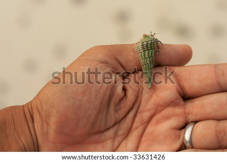 Male hand with hermit crab, conical green shell - stock photo