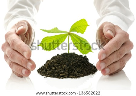 Male hands around new plant growing from pile of soil. Concept of alternative healing. - stock photo