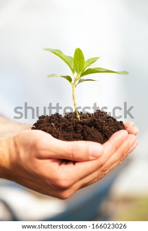 Male hands holding a plant.
