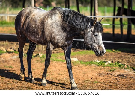 Male horse searching for food - stock photo