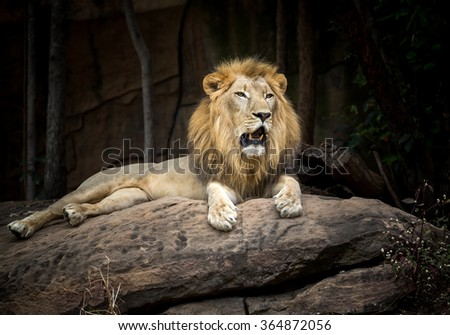 Male lion on a stone - stock photo