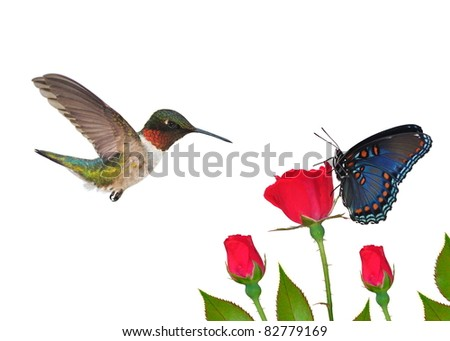 Male Ruby- throated Hummingbird and a Red- spotted Purple butterfly at red roses - for your card, background, and other artistic needs.