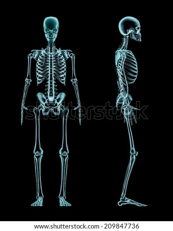 Male skeleton full body x-ray - stock photo