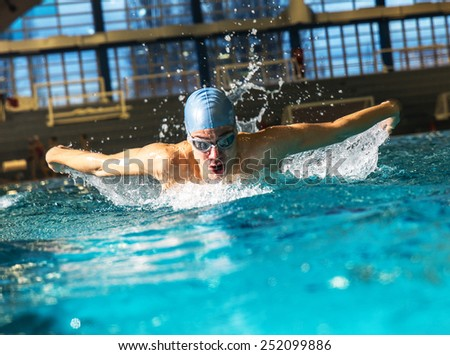 Male swimmer at the swimming pool.Butterfly style.