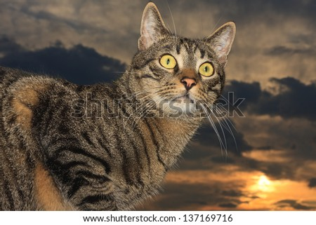 Male tabby cat portrait with the sunset clouds in the background - stock photo