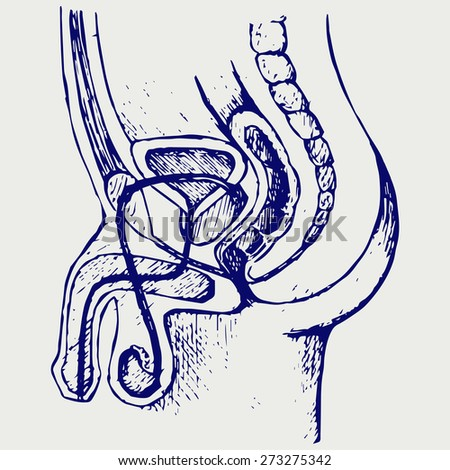 Male urinary system. Doodle style. Raster version - stock photo
