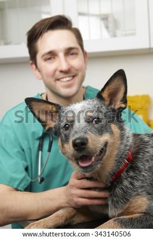 Male Vet Examining Pet Dog In Surgery - stock photo