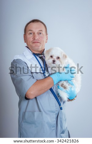 Male vet with a dog, the treatment of animals in a veterinary clinic - stock photo