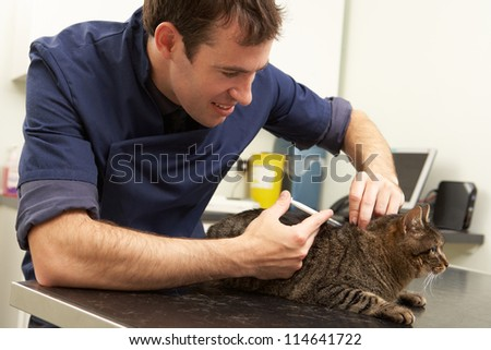 Male Veterinary Surgeon Examining Cat In Surgery - stock photo