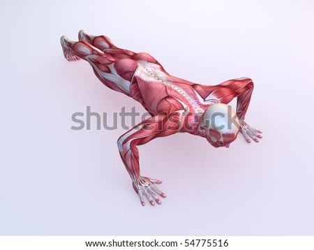 male workout - pushups - stock photo