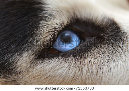 Malicious wolf sight of eyes close up - stock photo
