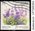 MALTA - CIRCA 2003: A stamp printed in Malta, shows healing plants, Vitex agnus-castus (Bundesdruckerei), circa 2003 - stock photo