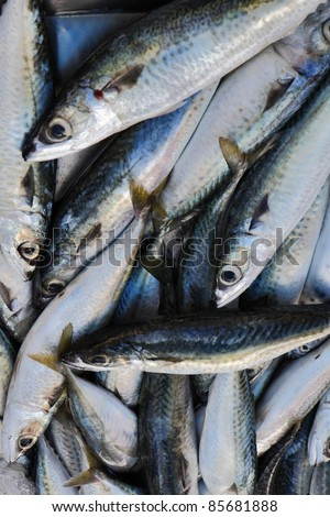 Malta Island, mackerels (Scomber scombrus) in a local fish market for sale - stock photo