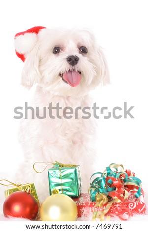 Maltese Christmas - stock photo