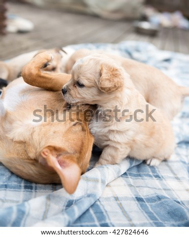 Mama Dog Playing with Her Puppy Outside