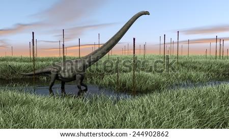 mamenchisaurus in swamp - stock photo